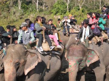 chitwan-tour